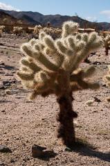 Glowing Cactus
