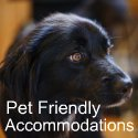 Pet-friendly vacations