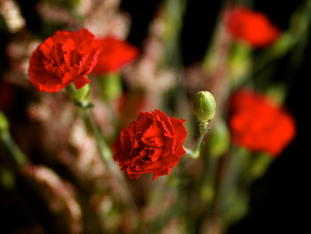 Photo:Red carnations By:VirtualWolf