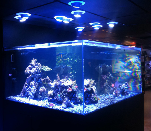 LED Aquarium Lights - Photon Pendants over a Reef Aquarium Flickr ...