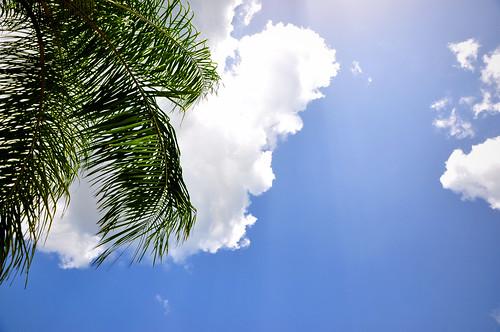 bill nikon florida palmtree 365 d90 w3inc 265the2010edition 7202010