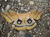 Dying Moth on the Sidewalk by Bill A