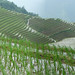 Rice Terraces, Ping'an by bsterling