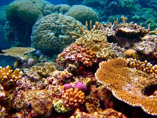 海洋酸化可能影響海洋生態結構。(圖片來源:Kyle Taylor, Dream It. Do It)