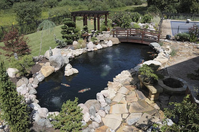 gunite koi pond with black plaster flickr photo sharing