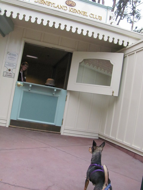 Poppins 39 first visit to the disneyland kennel club for Dog kennels near disney world