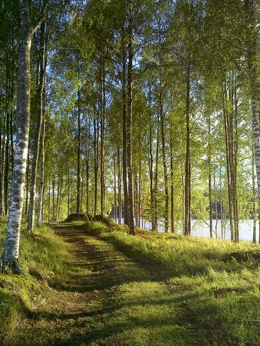 lake woods path keuruu isokirja pohjoisjärvi