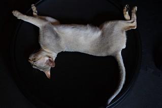 さかさ浮遊猫