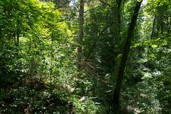 Nature Trail at Moundville Archeological Park