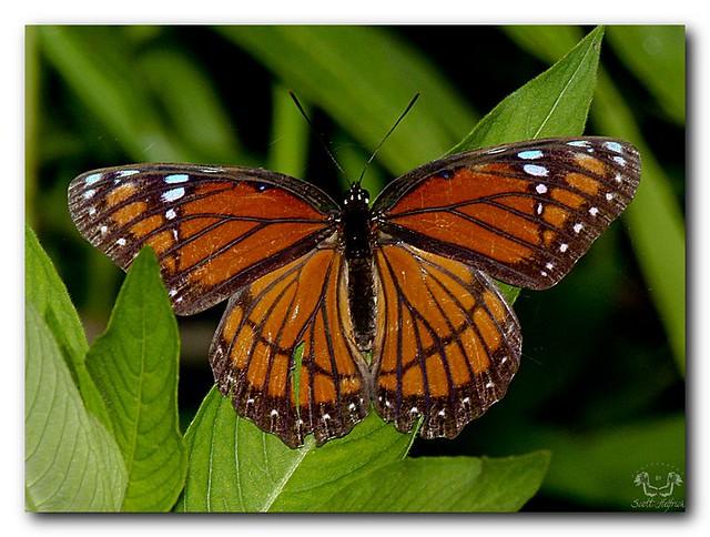 Z Gallerie Butterfly photo