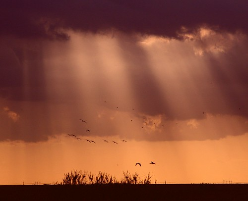 sunset nature skyscape colorful unitedstates florida hometown ibis sunrays southflorida coralspringsflorida