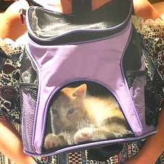 Kitty Front Pack