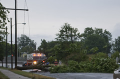Fallen Tree & Powerlines On Rosewood