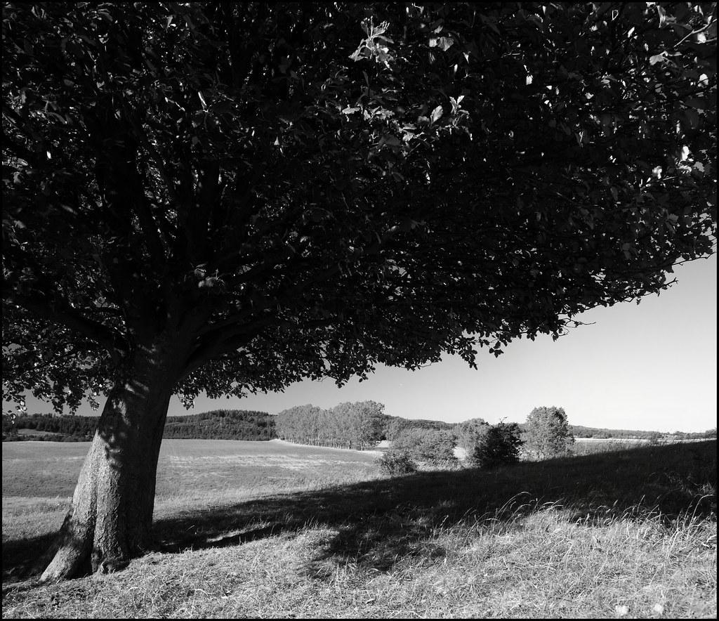 The Tree by Ulf Bodin