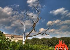 NGA Sculpture Garden Tree HDR