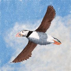 animal, water bird, puffin, charadriiformes, wing, illustration, bird, seabird,