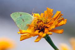 i proclaim this flower...
