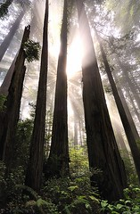 Prairie Creek Redwoods State Park, California