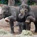 Zoo September 2010