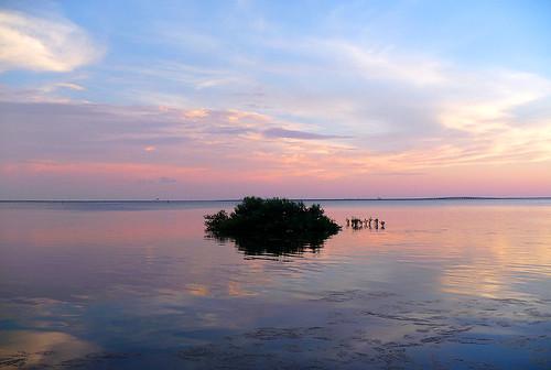 pink blue sunset sky colors clouds tampa florida dusk bugs wetlands marsh midges marshes