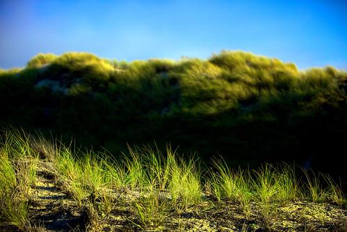 sunset green grass contrast sunrise landscape golden dunes dune pismobeach sanddunes oceanodunes greengrass softcoral pismodunes