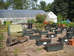 Schoolyard Demonstration Garden