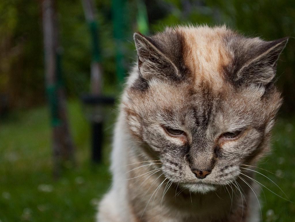 Сношение с котом 5 фотография