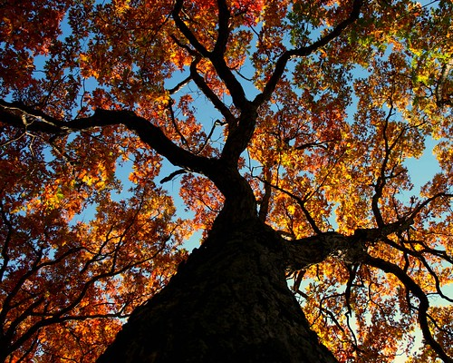 park autumn trees columbus ohio sky tree fall nature up leaves interestingness looking metro branches foliage trunk powell highbanks utatafeature 2010contest utata:project=tw184 utata:project=greatdayforup