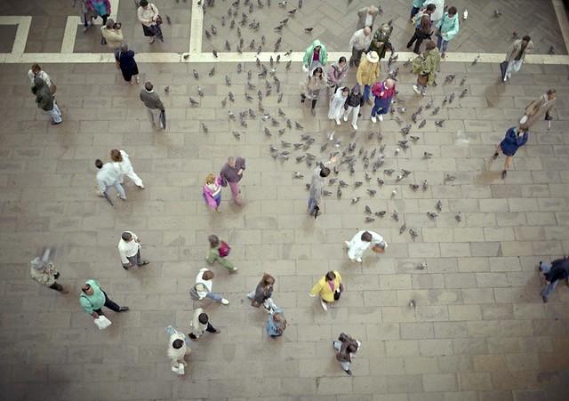San Marco Pidgeons