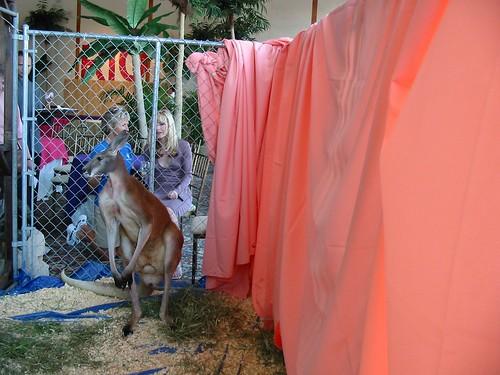 shop Studios kangaroo
