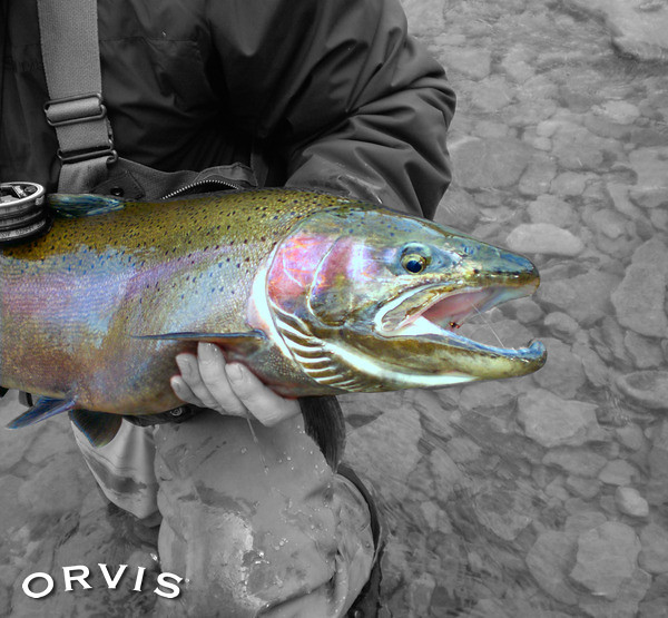 Orvis fly fishing contest elk beast flickr photo for Fly fishing competitions