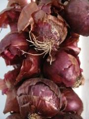 purple(0.0), thistle(0.0), plant(0.0), tuber(0.0), vegetable(1.0), onion(1.0), red onion(1.0), shallot(1.0), produce(1.0), food(1.0),