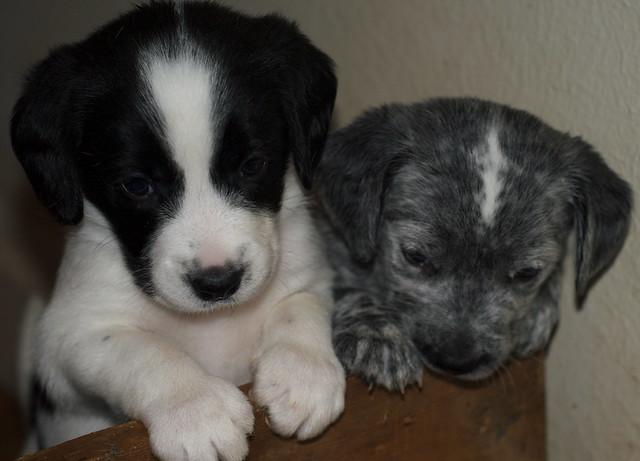 Antibiotics For Dog Inner Ear Infection