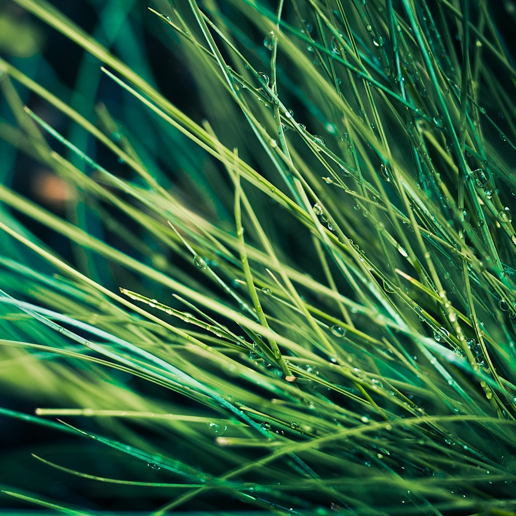 Green / Grass / Nature / Texture