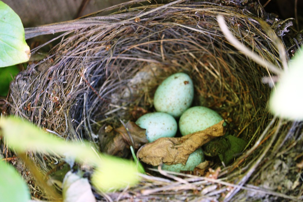Working With Nested Aggregates Using NEST and Elasticsearch
