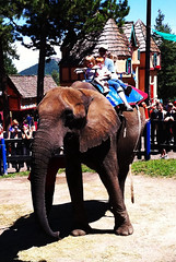 Elephant at renaissance fair.