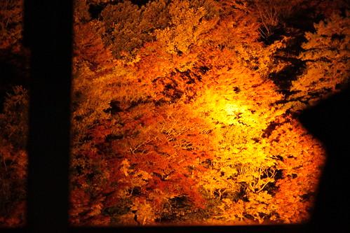 嵯峨野トロッコ電車(ライトアップ)