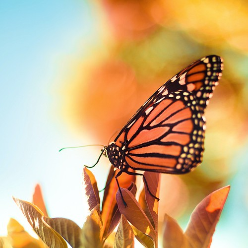 Butterfly / Nature / Macro