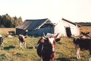 Pyhäsalmi-1983--00007