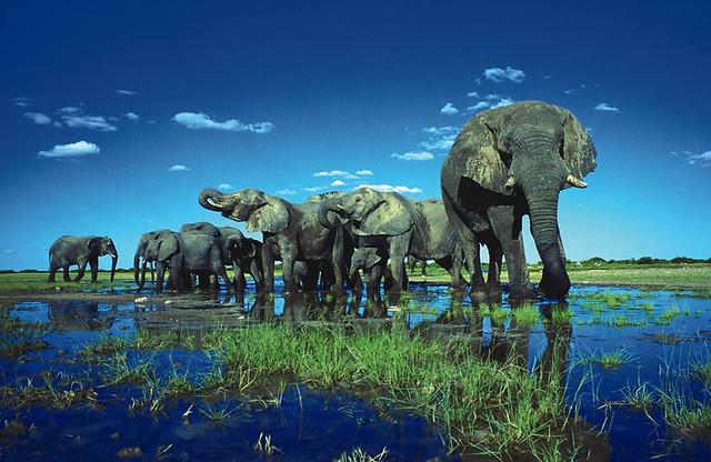 Elefanter i Etosha National Park