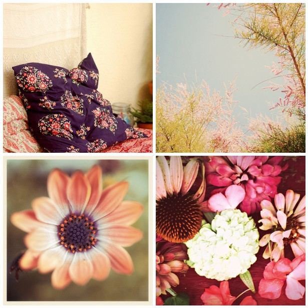 colour palette : beautiful blooms - curated by Emma Lamb
