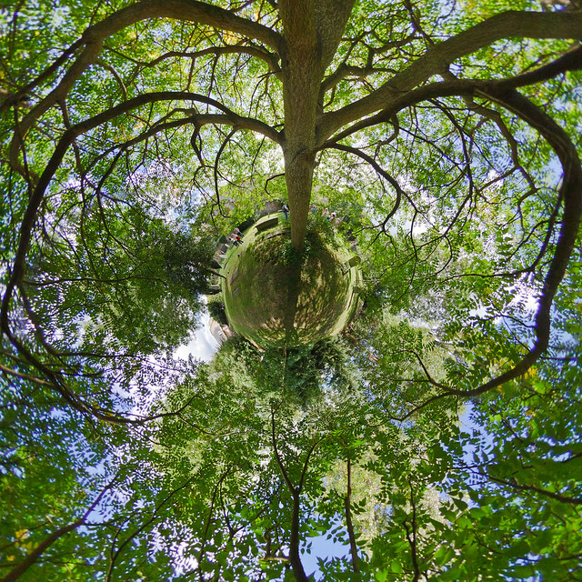 Tree of heaven flickr photo sharing