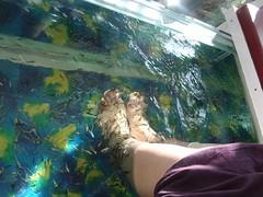Fish Pedicure - Vcare Medspa