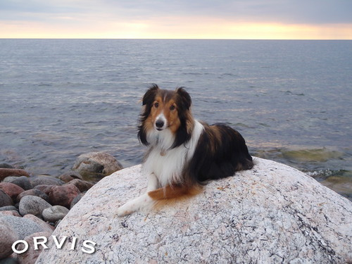 Orvis Cover Dog Contest - Ripple