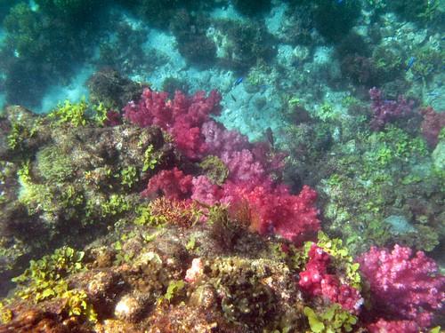 ヒリゾ浜2010