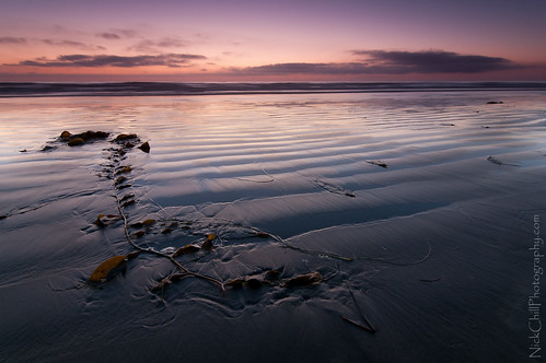 california sunset seaweed beach landscape photography nikon image sandiego stock scenic violet pacificocean kelp delmar d300s nickchill