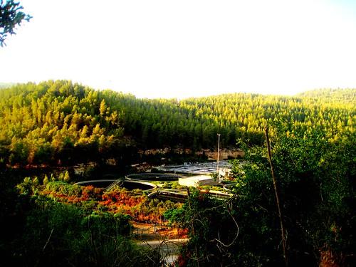 trees green view jerusalem naturepicnik