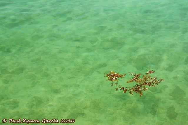Sea Weed, Honda Bay