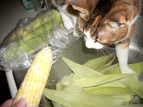 Miss Lucy, produce inspector