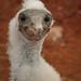 galapagos island ecuador-2716 by ronnyfaessler